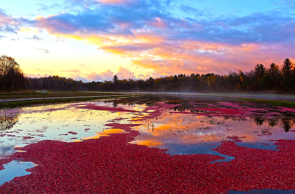 cranberrymarsh