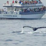 Seal and Whale Watching Tours